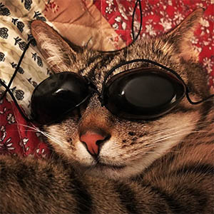 Christina Seeley - Social Media Photography - One Cool Cat